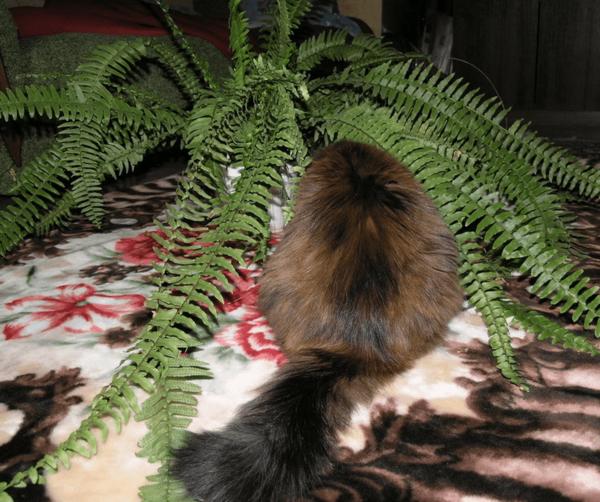 Кошка и папоротник
