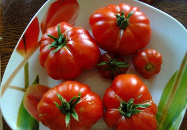 Стоит отметить, что томаты хорошо хранятся, пригодны для транспортировки