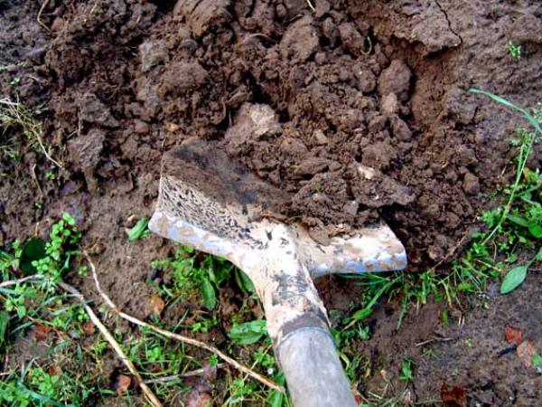 Глубокая перекопка почвы осенью – профилактика блошки