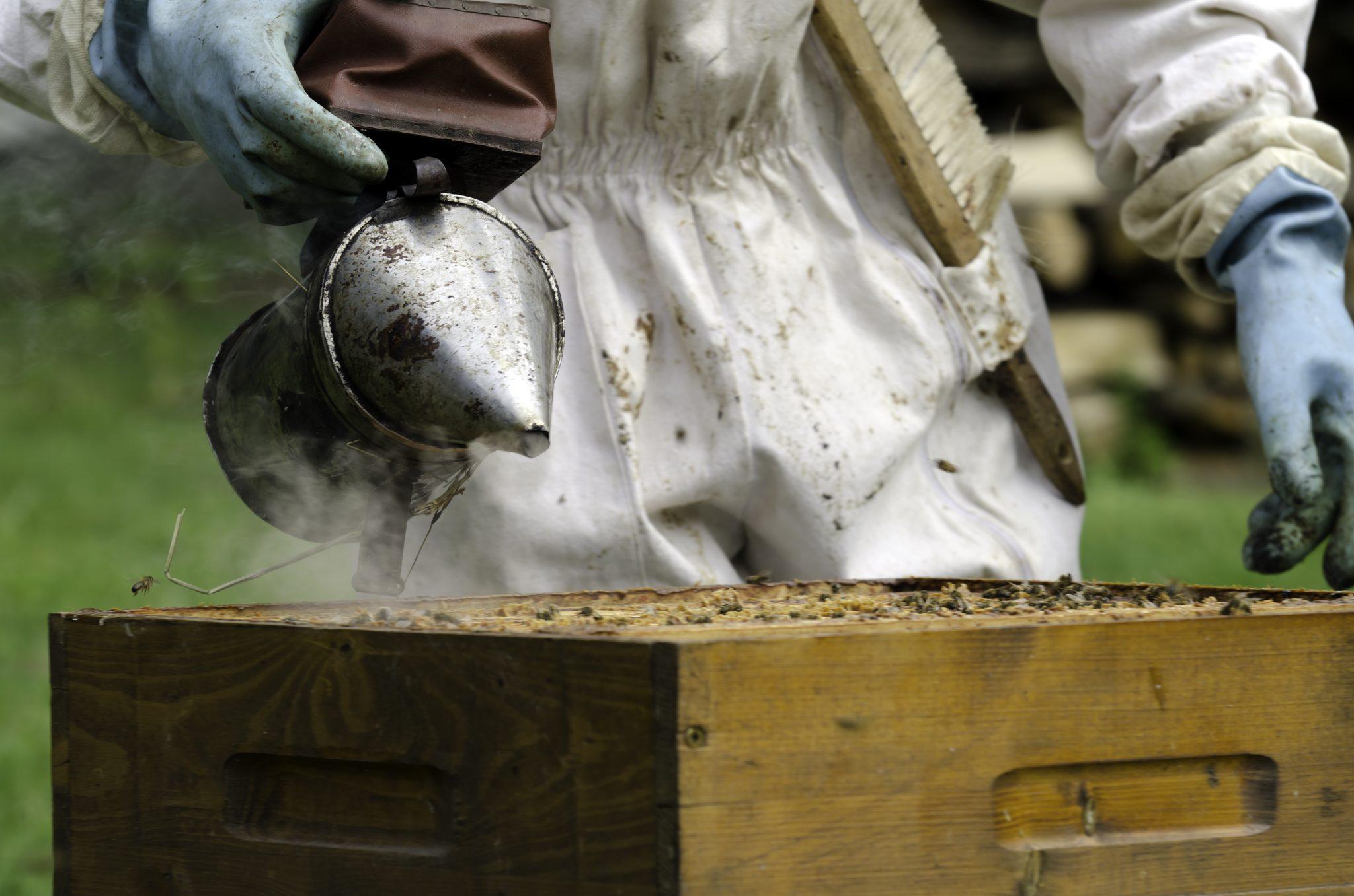 Борьба с роением пчел по методу Таранова