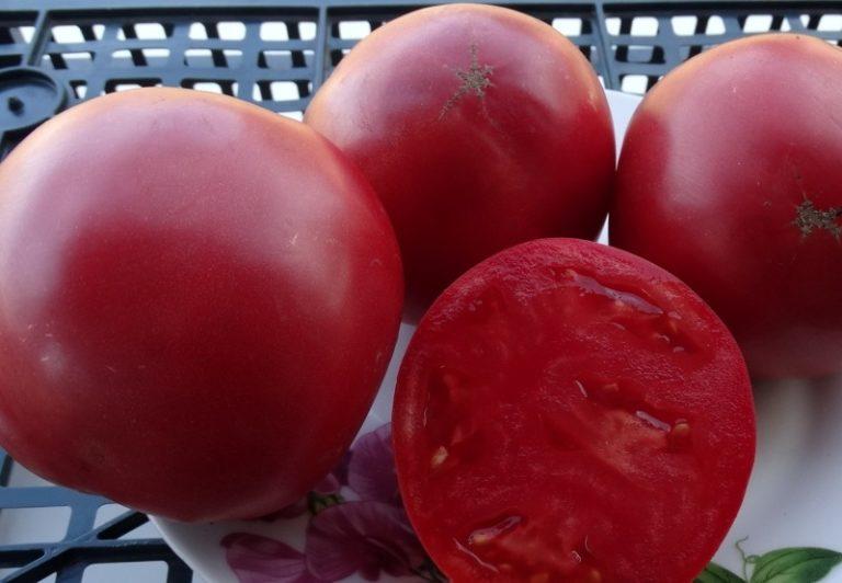 Форма томатов округлая или сердцевидная выровненная