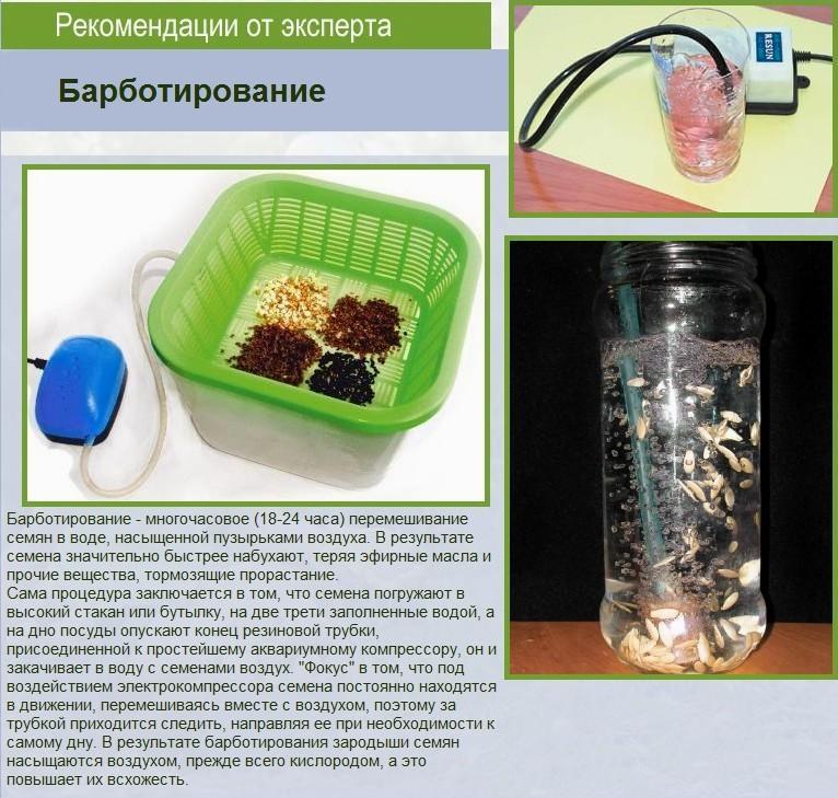 Семена огурцов в ёмкости с водой и компрессор