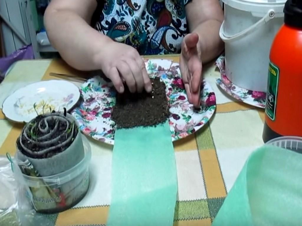 Семена на ленте