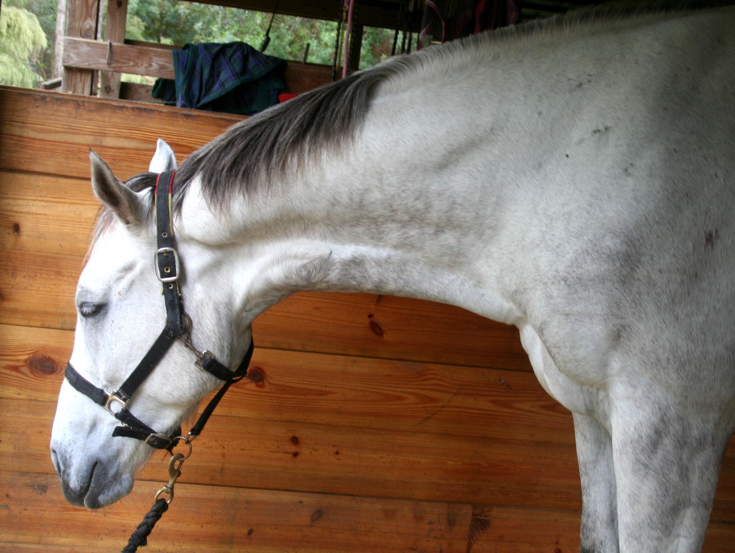 Шея лошади