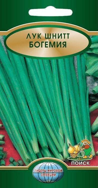 Шнитт-лук сорта Богемия