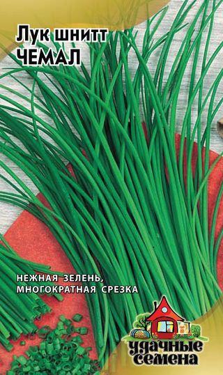 Шнитт-лук сорта Чемал