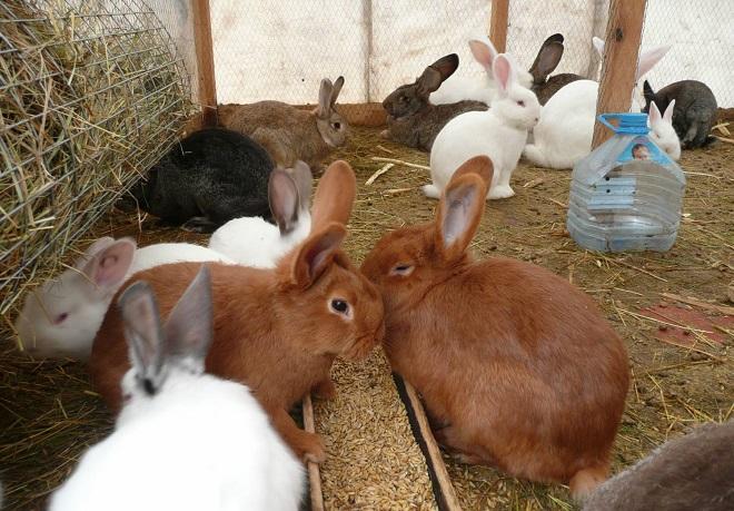 Кролики могут перезимовать в теплице