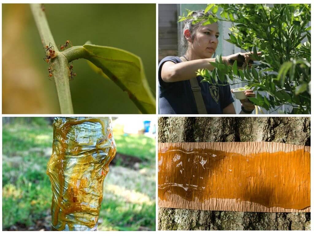 Средства пропитки для деревьев