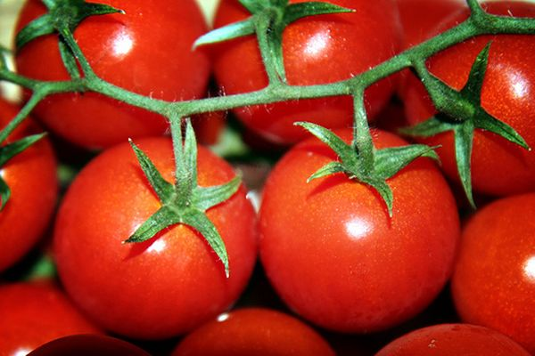 помидоры и кулинария