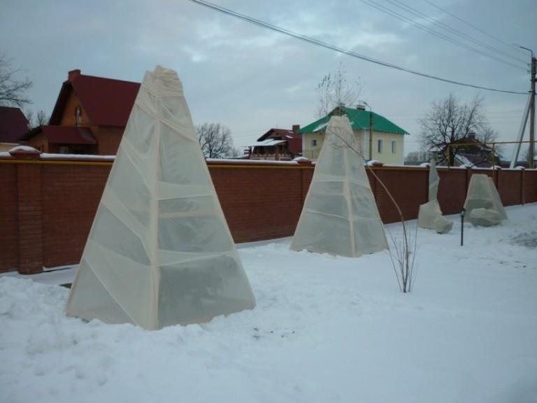 Укрытие дерева на зиму
