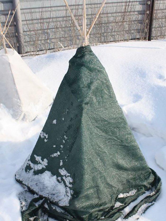 Укрытое на зиму молодое дерево