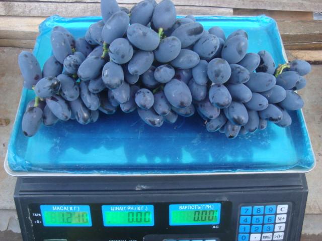 Крупная гроздь винограда с вытянутыми темно-синими ягодами и цифровые весы