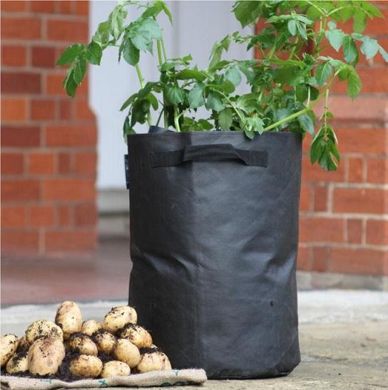 выращивание картошки в мешках фото
