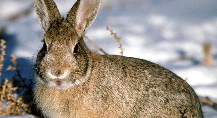 заяц на заснеженном поле