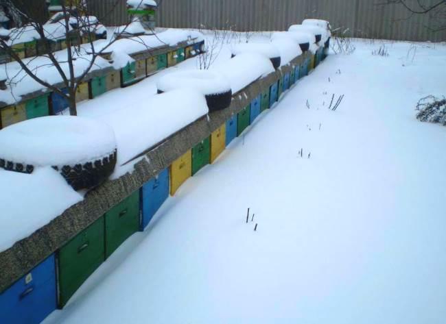 Зимовка пчел на улице в средней полосе россии