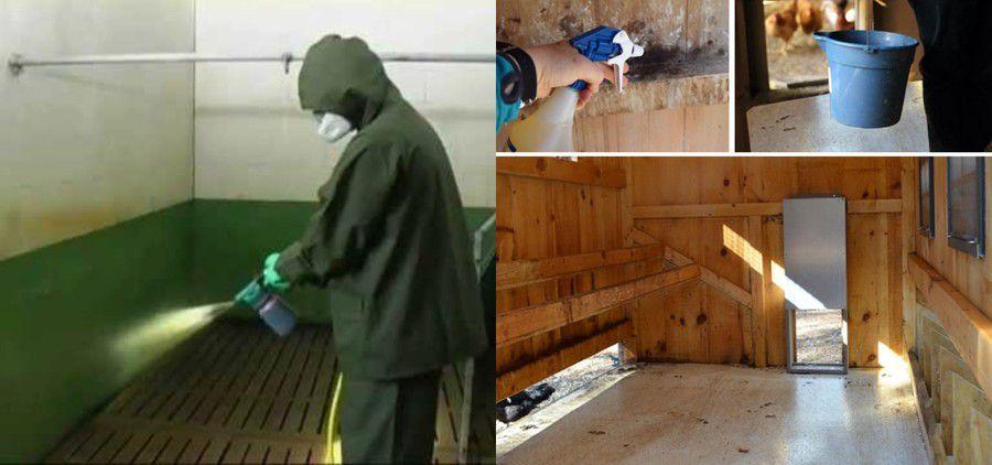 Регулярная уборка и дезинфекция сократит риск заболевания гельминтами у птиц