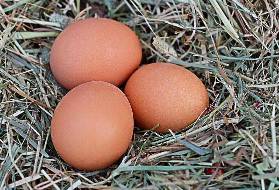 Потеря яйценоскости также может являться причиной жизнедеятельности гельминтов