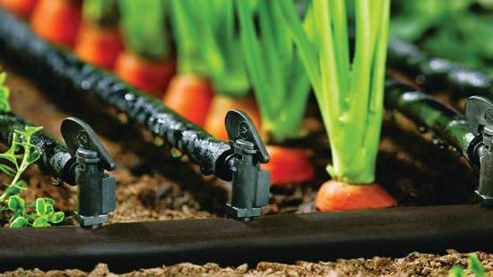 Виды и способы полива огородных и садовых культур