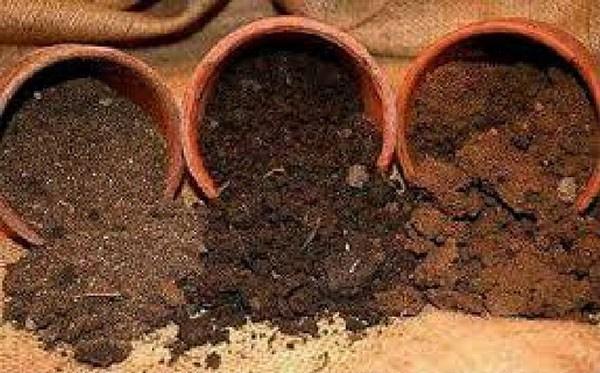 Высаживать базилик в открытый грунт рассадой: когда, куда и как это правильно делать, можно ли заглублять, а также каковы особенности выращивания?
