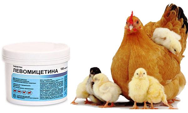 Левомицетин курам