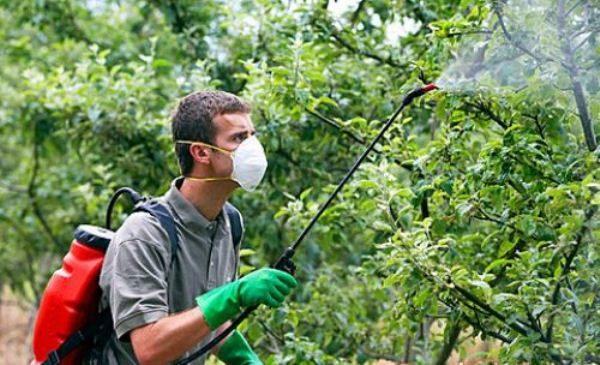 Обработка яблонь весной от болезней и вредителей: когда и чем опрыскивать, эффективные методы защиты