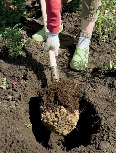 Подготовка питательного грунта для весенней посадки саженца крыжовника