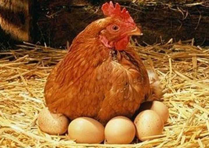 Яйцекладка наступает относительно рано