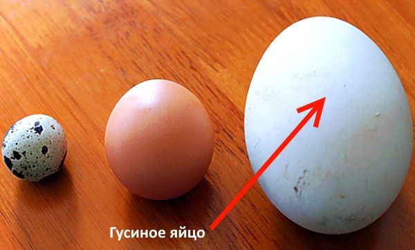 Яйца перепела, курицы и гуся