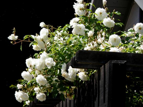 ТОП-10 Лучших дождевателей для полива: как подобрать устройство для ухода за газоном и огородом? | Рейтинг +Отзывы