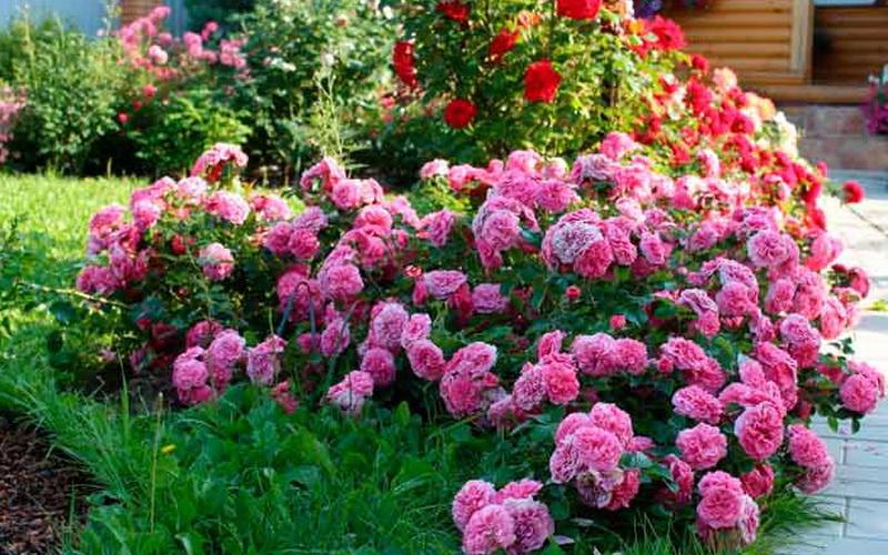 Ландшафтный дизайн сада: какие растения посадить с розами