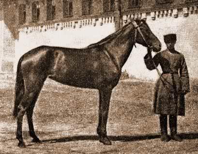 Кабардинская лошадь в военное время