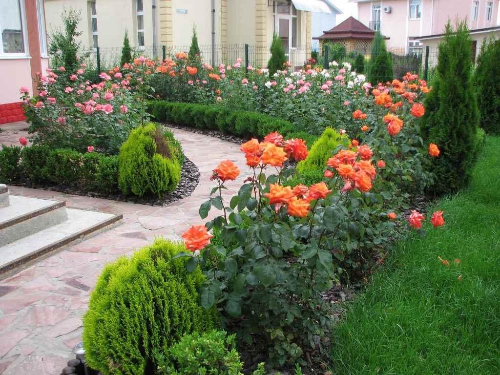 идея использования ярких роз в дизайне двора