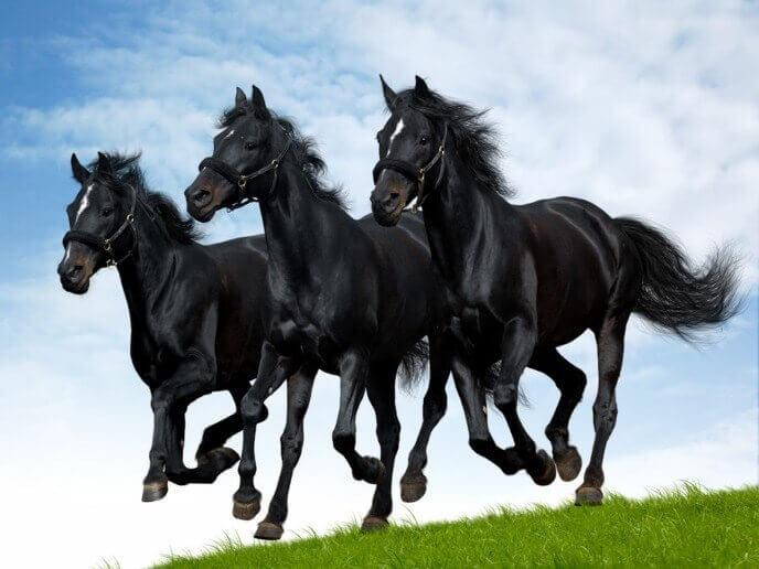 Разведение кабардинской породы лошадей