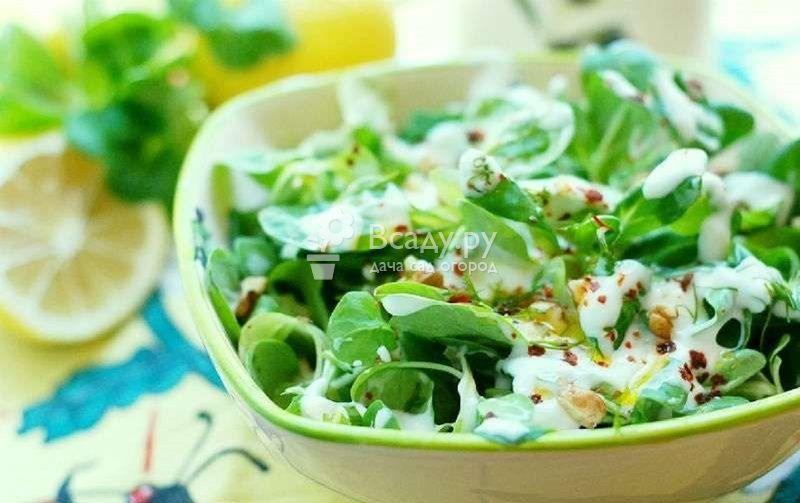 Витаминный салат из портулака