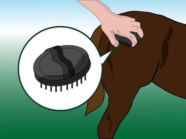 Первый этап очистки лошадиного тела перед запряжкой производится при помощи скребницы