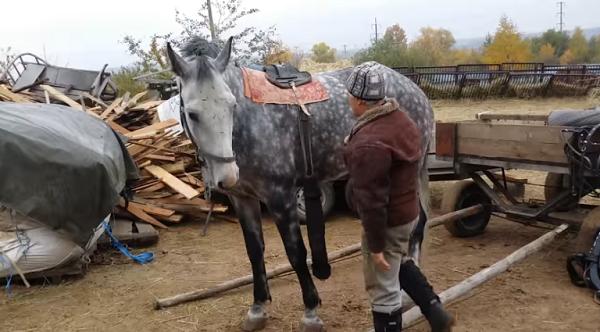 Седелку нельзя располагать слишком низко или слишком высоко, коню так будет неудобно