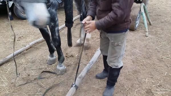 Коня можно завести в оглоблю задом, или накатить оглоблю на него самостоятельно