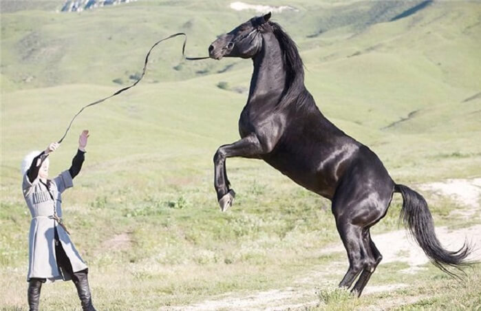 Карачаевская порода