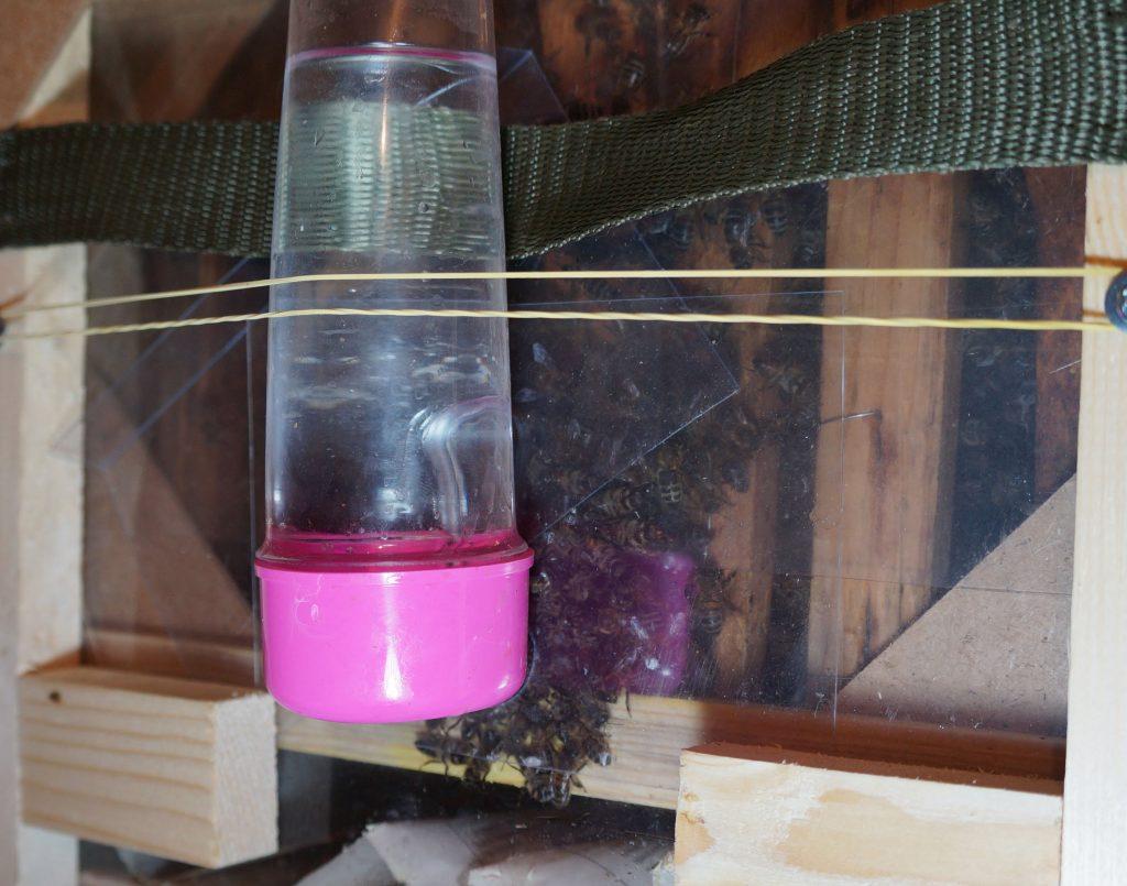 Вода для пчел: сколько требуется воды, и как привлечь к поилке?
