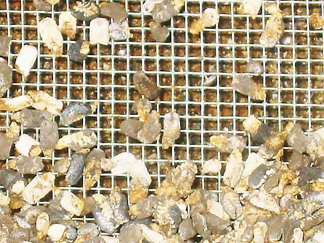 Личинки пчел, погибшие от аскосфероза