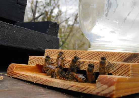 Пчелы пьют воду из поилки