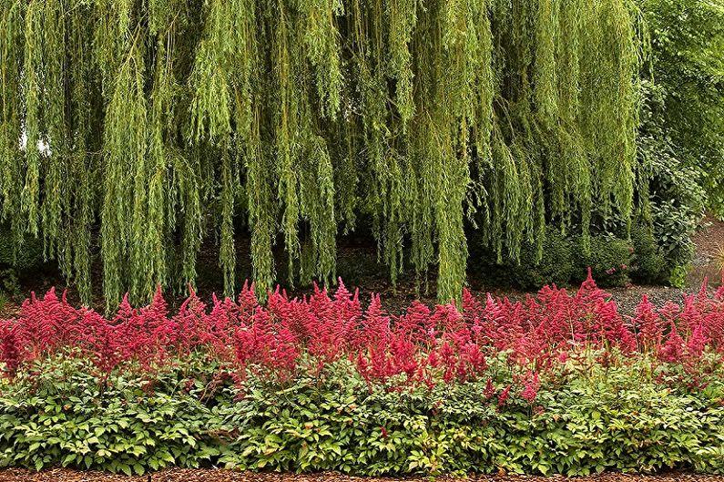Астильбы на фоне деревьев и кустарников