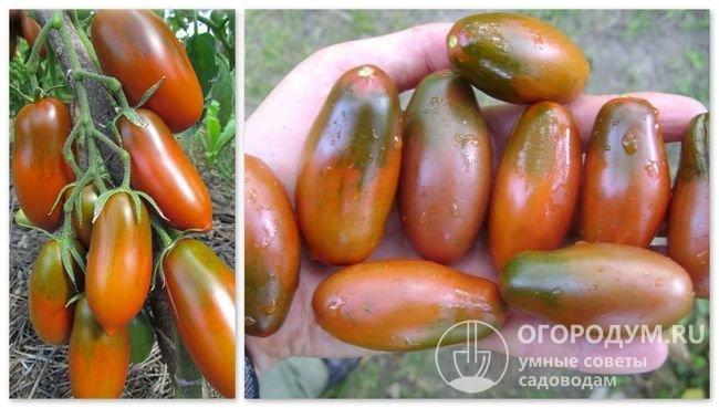 Фотографии помидоров сорта «Сосулька черная»