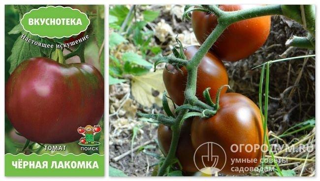 Упаковка семян «Черная лакомка» и фотография помидоров этого сорта