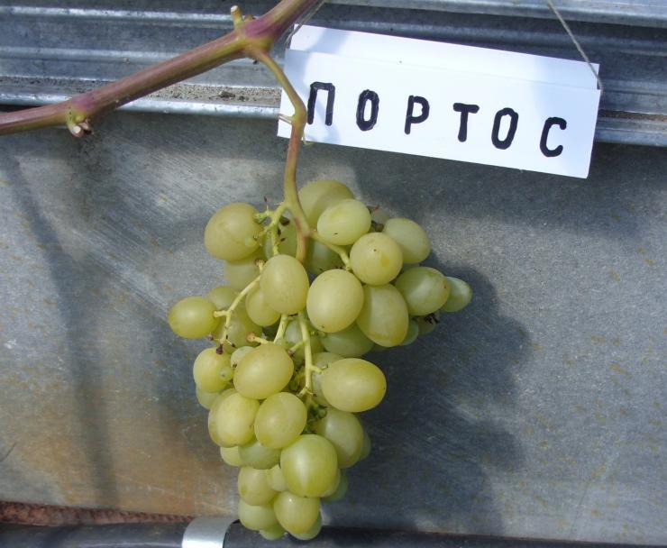Виноград Портос