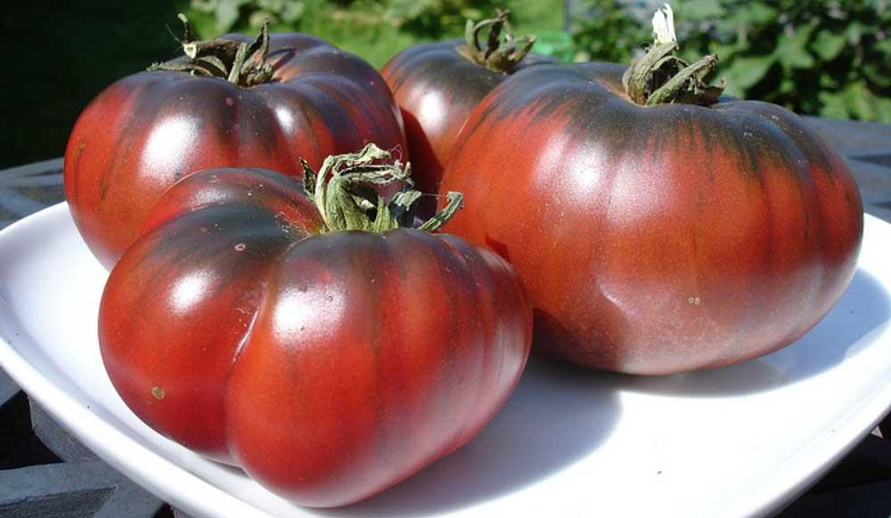 Сорт томатов Бизон черный