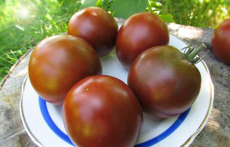 Сорт томатов Черный барон