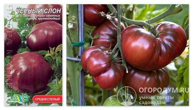 Упаковка семян «Черный слон» и фотография помидоров этого сорта