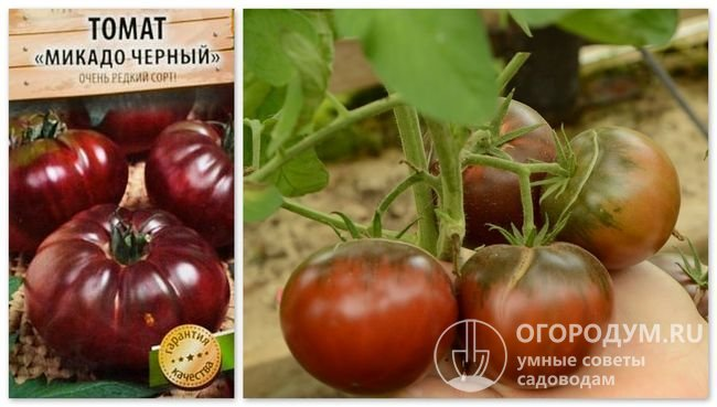 Упаковка семян «Микадо черный» и фотография помидоров этого сорта
