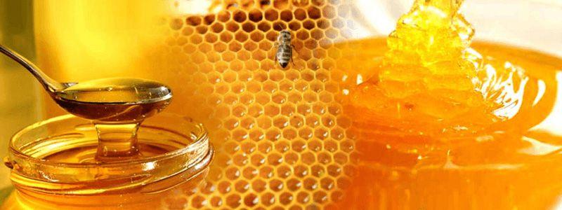 Как выбирать качественный мед